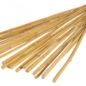 Bamboo Canes 4'