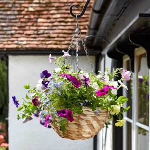 "Smart Garden 14"" Gilgil Hanging Basket"